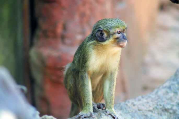 animal india monkey zoo